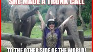 Cassandra Kubinski, Thai Elephants Meme
